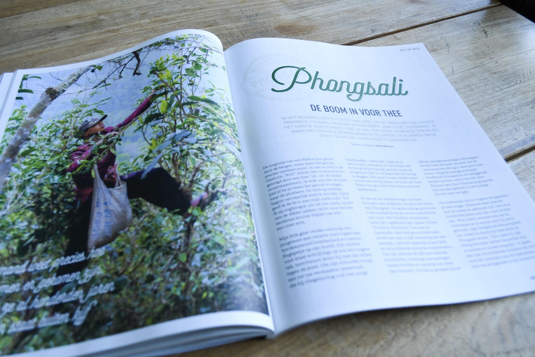 Phongsali: de boom in voor thee